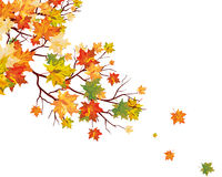 Autumn maple leaves royalty free illustration