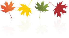 Autumn maple leaves. In different colors vector illustration