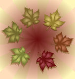 Autumn Maple Leaves. Set of Autumn Maple Leaves Stock Photos
