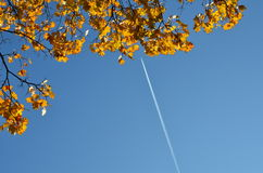 Yellow autumn Maple leaves on blue sky background. royalty free stock images