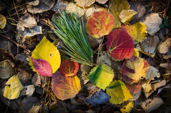 Autumn, maple leaves, autumnal foliage Royalty Free Stock Photo