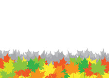 Autumn maple leaves background. The maple leaves on the white background Stock Image
