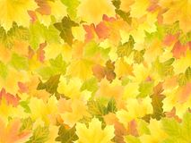 Autumn maple leaves background Royalty Free Stock Images