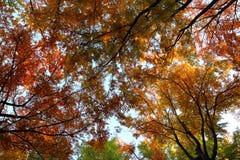 Autumn maple leaves background Stock Photos