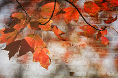 Autumn Maple Leaves Background Royalty-vrije Stock Fotografie
