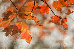 Autumn Maple Leaves Background Royaltyfri Fotografi