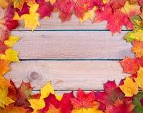 Autumn maple leaves background Stock Photo