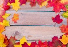 Autumn maple leaves background Royalty Free Stock Image