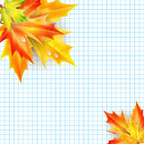 Autumn maple leaves on a background of notebook sheet Stock Photos