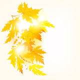 Autumn maple leaves background. With space for text stock illustration