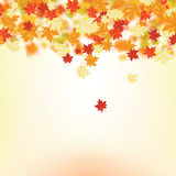 Autumn maple leaves Royalty Free Stock Photos