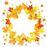 Autumn maple leaves Royalty Free Stock Photo