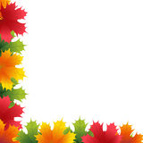 Autumn maple leaves background Stock Images