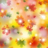 Autumn maple leaves background. Vector illustration yellow vector illustration