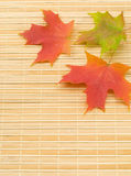 Autumn maple leaves on bamboo mat Royalty Free Stock Image