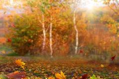 Autumn maple leaves .Beautiful autumn landscape with �olorful fo stock photo