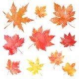 Autumn maple leaves stock illustration