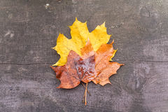 Autumn maple leaves on a bench Stock Photos