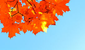 Autumn maple leaves and  blue sky Stock Image