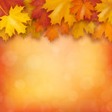 Autumn maple leaves on blurry background. Realistic vector illustration vector illustration