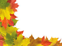 Autumn maple leaves border isolated on white Stock Photography