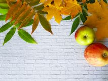Autumn maple leaves border. On a white brick wall apple frame royalty free stock photo
