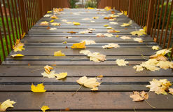 Autumn maple leaves on a bridge Royalty Free Stock Photography