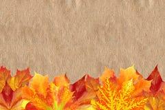 Autumn Maple Leaves brillante sobre vieja textura de papel Fotos de archivo libres de regalías