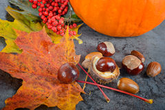 Autumn maple leaves with chestnuts and pumpkin Royalty Free Stock Images