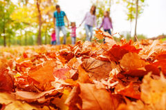 Autumn maple leaves close-up and family on back Stock Images