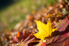 Autumn maple leaves horizontal background Stock Photo