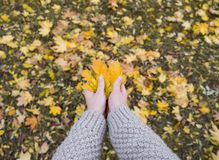 Autumn Maple Leaves dans le wooman remet le fond Image libre de droits