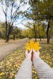 Autumn Maple Leaves dans le wooman remet le fond Photographie stock