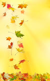 Autumn maple leaves. Falling down on natural background royalty free illustration