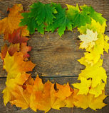 Autumn maple leaves falling frame Royalty Free Stock Photography
