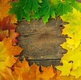 Autumn maple leaves falling frame Royalty Free Stock Photos