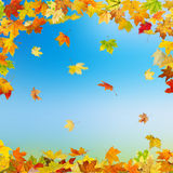 Autumn maple leaves. Falling autumn maple leaves on natural background Vector Illustration