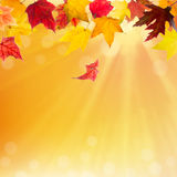 Autumn maple leaves falling Stock Image