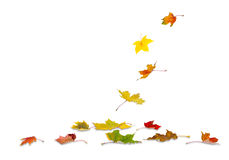 Autumn maple leaves falling Stock Photo