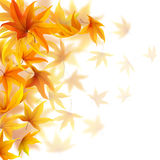 Autumn maple leaves. Falling autumn maple leaves on white background Royalty Free Illustration