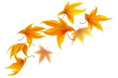 Autumn maple leaves. Falling autumn maple leaves on white background, vector illustration vector illustration