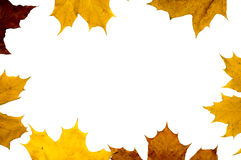 Autumn maple leaves frame Royalty Free Stock Image