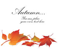 Autumn maple leaves frame Royalty Free Stock Photography