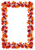 Autumn maple leaves frame. Vector illustration. Vector illustration of frame with autumn maple leaves of various colors on a white background vector illustration