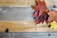Autumn Maple Leaves Framing Rustic träbakgrund arkivbilder