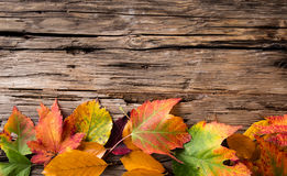 Autumn maple leaves on gray wooden background Royalty Free Stock Photo
