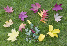 Autumn maple leaves on a green  lawn Stock Images