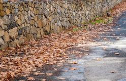 Autumn maple leaves on the ground Royalty Free Stock Image