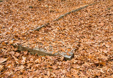 Autumn maple leaves on the ground Stock Photography