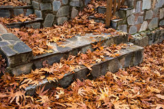 Autumn maple leaves on the ground Stock Images